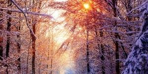 Winter Woods Dark Art Danotomorrow wallpaper