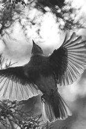 dawn-bird